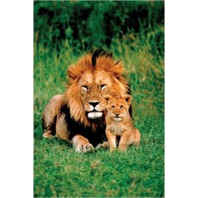 Affiche : Lion et son Petit