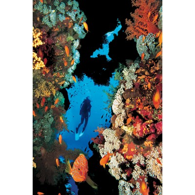 Affiche : Récif de Corail
