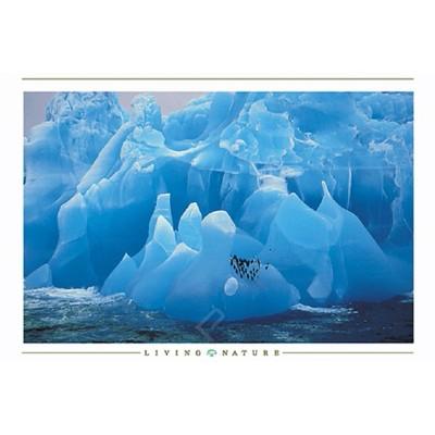 Affiche : Pingouins sur Iceberg
