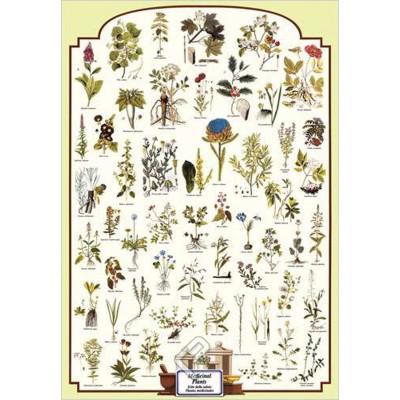Affiche : Plantes Médicinales