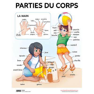 Affiche : Parties du corps
