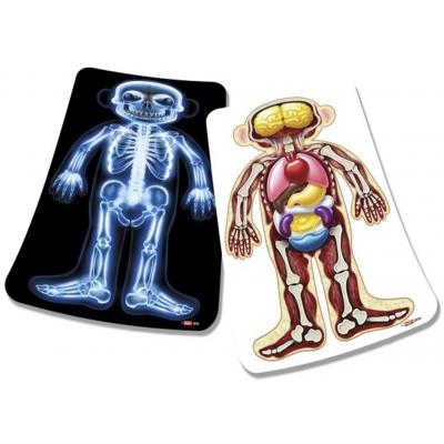 Image de l'intérieur du corps humain