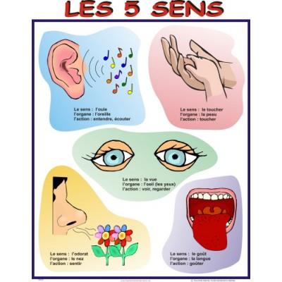 Affiche : Les 5 sens